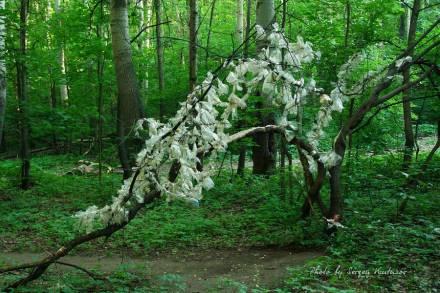 Полиэтиленовое дерево