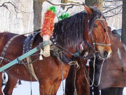 В рождественский день на Кумысной поляне