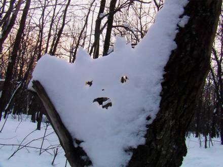 Дух леса...
