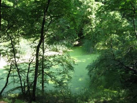Лесное озеро в п. Красный Текстильщик