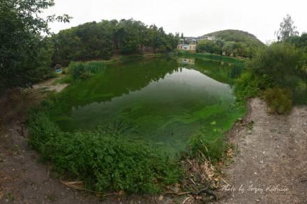 Зелёный пруд, зелёные холмы