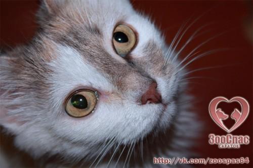 Кошка Селин ищет дом!