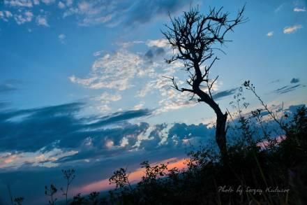 Рассвет под сухим деревом