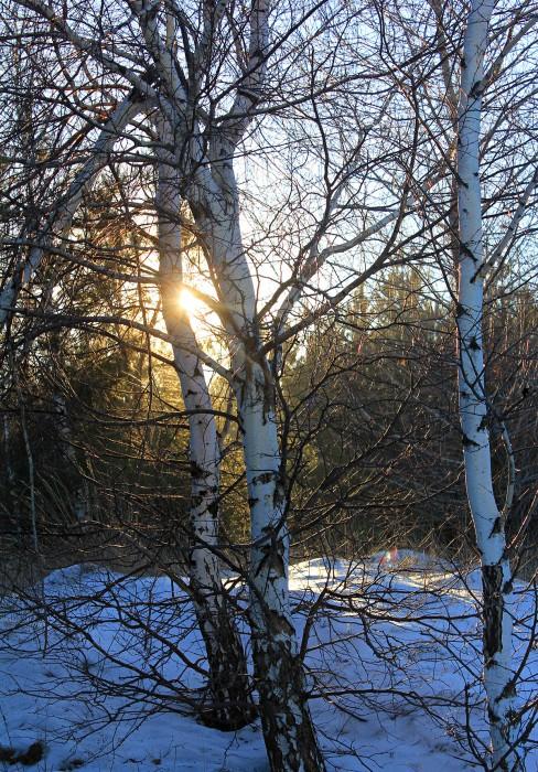 В тиши лесного таинства