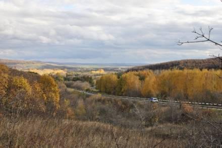 Лес около Н.Бурас 2
