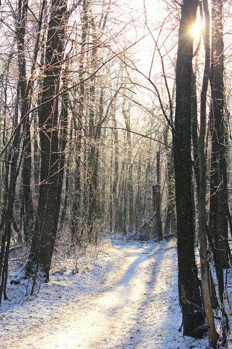 Зимняя просека. Серебряный лес