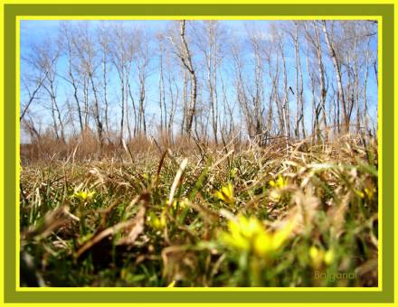 Весна идет ! Весне дорогу!