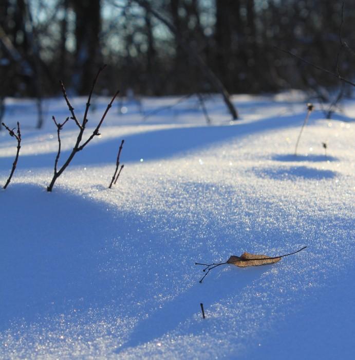 Зимнее изящество
