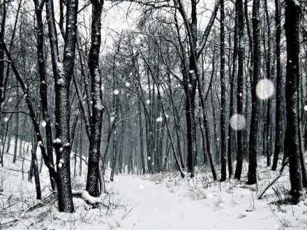 Зима (Кумысная поляна)
