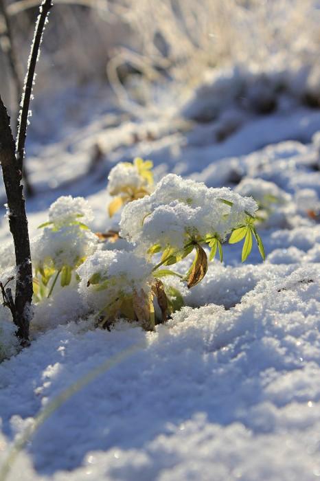 Жизнь зимнего леса