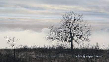Дерево над облаками