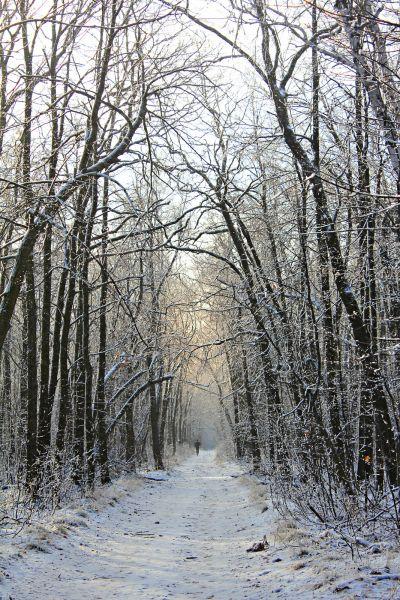 Зима в Саратовском лесу