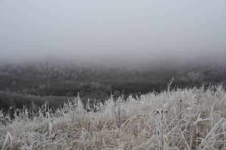 лес и туман