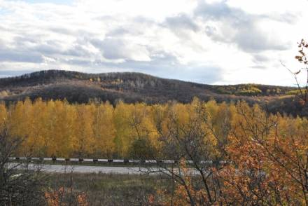 Лес около Н.Бурас