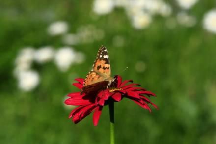 и флора и фауна....