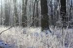 Серебряная сказка зимнего леса