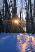 Зовущая лыжня