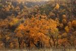 Осень в Смирновском ущелье
